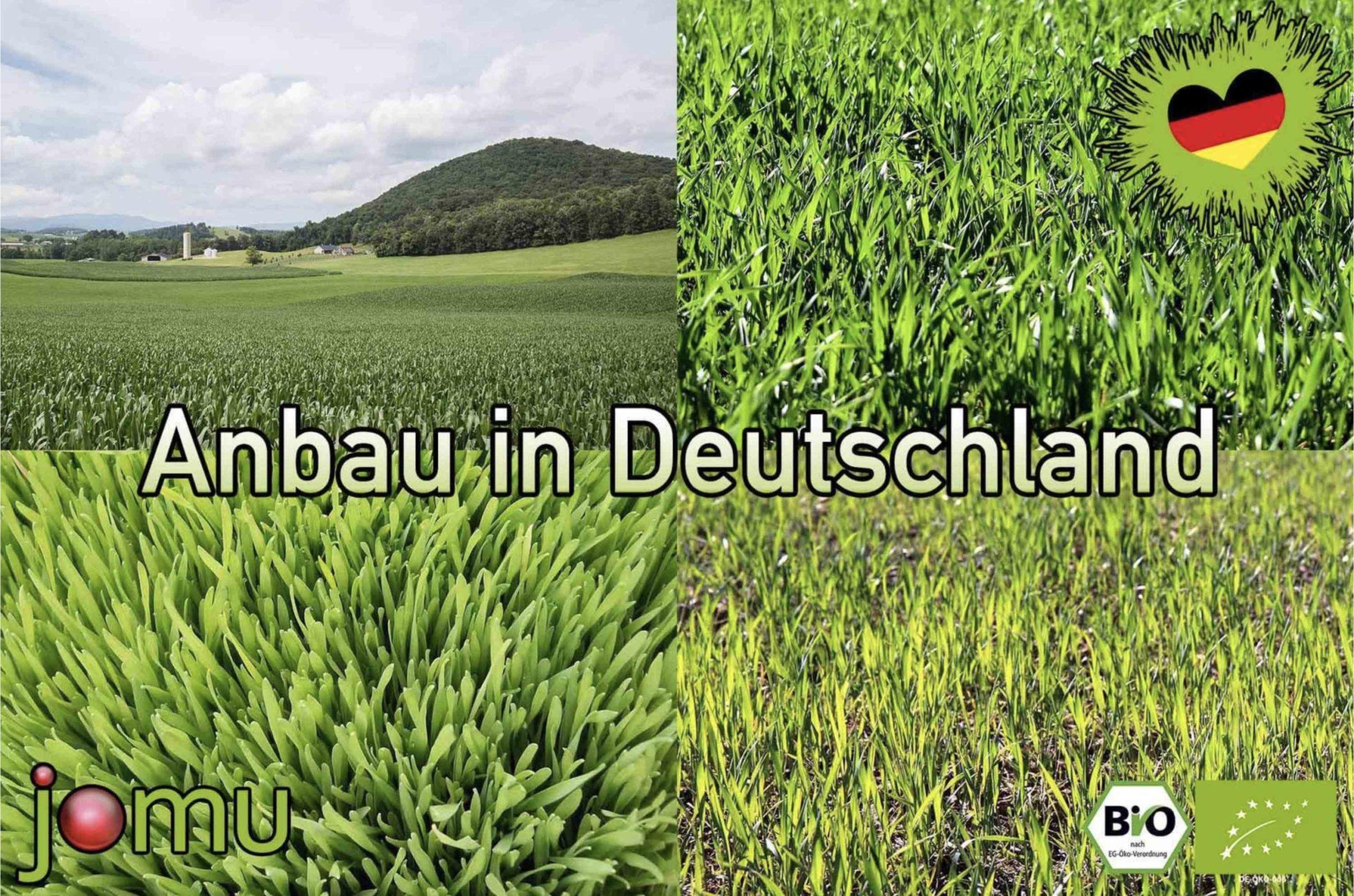 Anbau in Deutschland